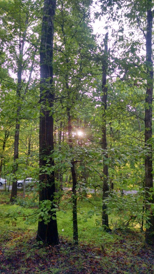 sunrisetrees